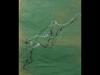 dessin-papier-de-soie-4